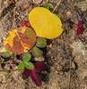 Fall foliage along the trail