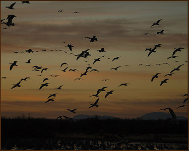 Bosque del Apache - Day 1