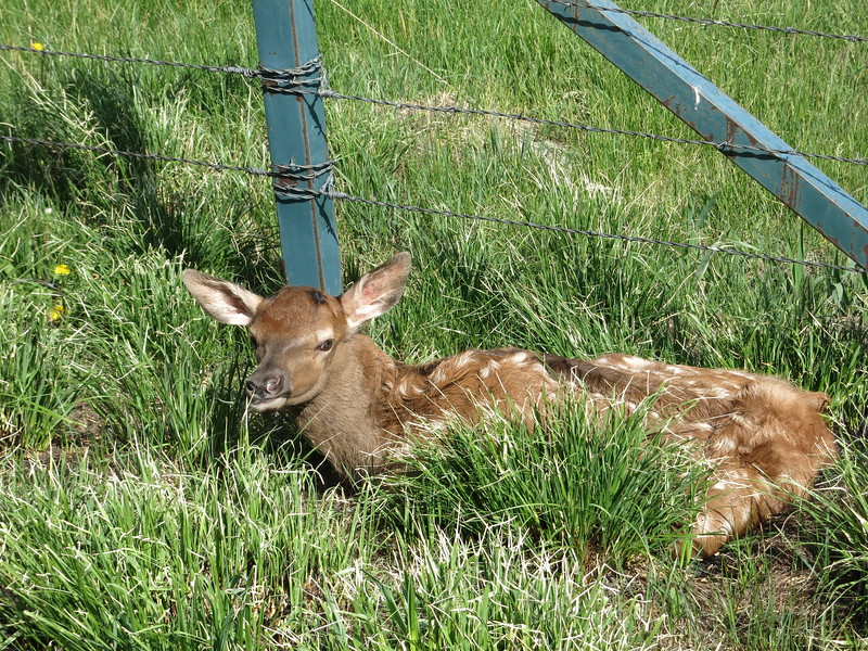 It wasn't caught in the fence, but then I worried that it had been hit by a car and injured.
