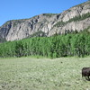 A cow and geology.