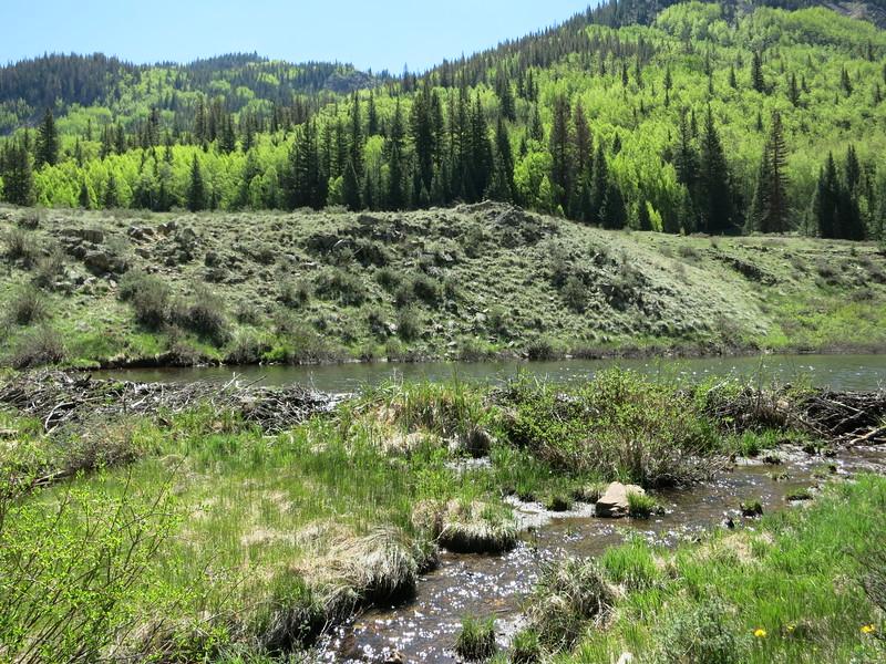 A beaver dam.