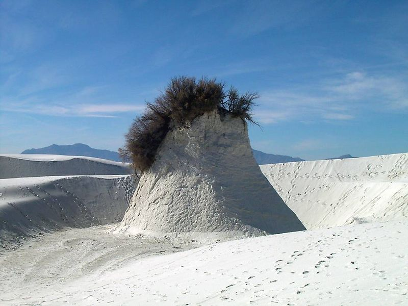 m) Pedestal formation. The roots of this plant hold the sand in place, creating this pedestal formation.