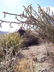Pa taking  a picture of cactus on the hiking trails behind the rental house.