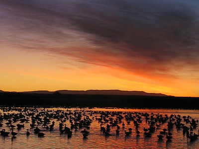 Video/audio of 30,000 Snow Geese taking off at dawn. It's an amazingly fast process. Be sure you turn up your sound up to hear the cacophony! (2 mins)