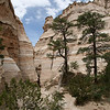 Slot canyon at Kasha-Katuwe Tent Rocks Natl Monument.