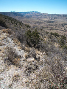 Dog Canyon near Guadalupe Ridge