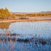 Landscape-NM-1601