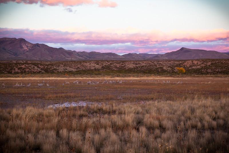 Landscape-NM-2302