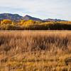 Landscape-NM-1606