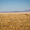 Landscape-NM-1615
