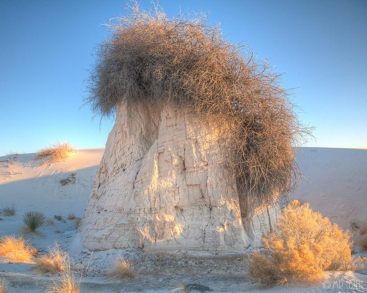 Cottonwood @ White Sands, NM