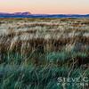 Grasses Galore
