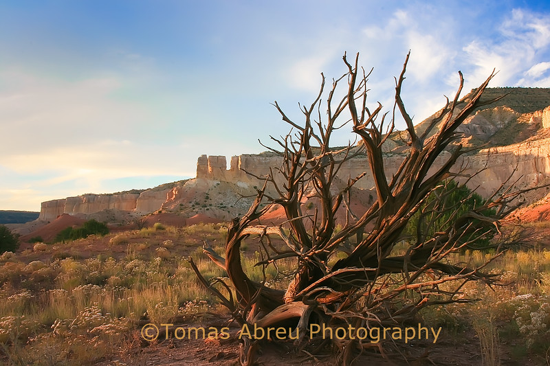 Still Nature, Ghost Ranch, New Mexico
