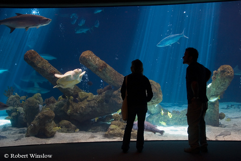 No Model Release, Man and Woman viewing Albuquerque Aquarium, Albuquerque, New Mexico, USA, North America