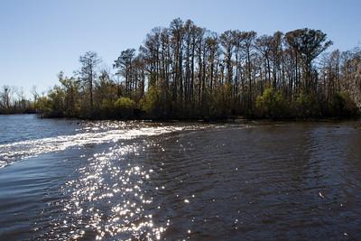 Bayou Segnette Swamp Tour