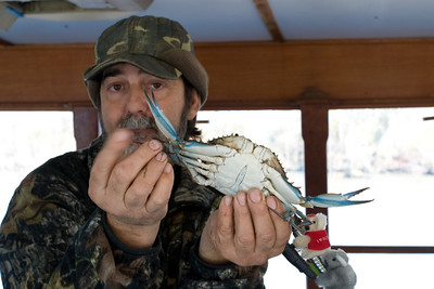 Captain Tom and a Blue Crab