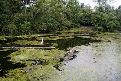 The Louisiana Swamp