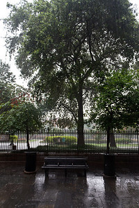 Rain on Jackson Square