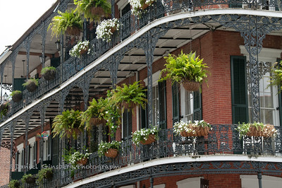 Wrought iron balcony and hanging plants adorn New Orleans building.