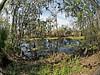 A fisheye view of the bayou.