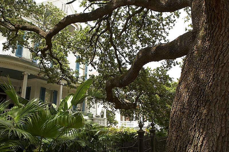 The next few photos show some of the grand, old houses of the Garden District.