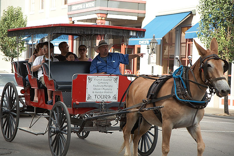 Outside of Jackson Square, you can hire a horse-driven tour for $12 a person.