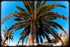 Backyard Palm Tree