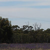 Day 26 - between Hay and Narrandera