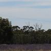 Day 26 - between Hay and Narrandera