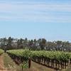 Day 26 - Vines between Hay and Narrandera