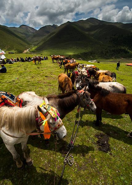 Horse festival in the Minya Konka area