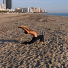 Morning exercises on Miami Beach