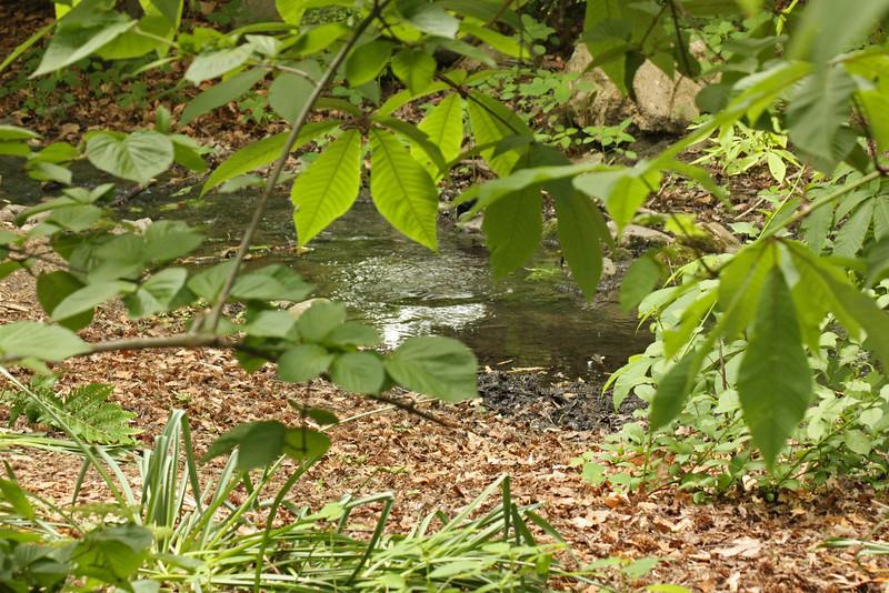 Bronx Zoo - stream
