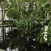 NY Botanic Garden conservatory