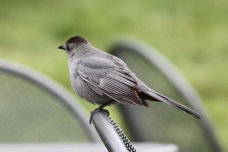 Bird, NY Botanic Garden