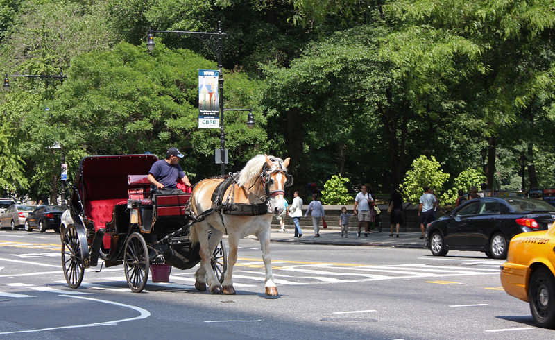 Horse-drawn carriage tours of Central Park