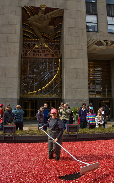 After coming back down from the observation deck we walked around the rest of Rockefeller Center. There was a cranberry bog setup on the east side of the building.