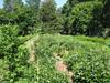 Locust Grove, 07/17/2011