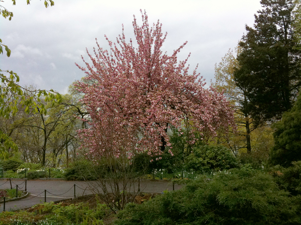 Spring in Fort Tryon Park