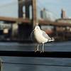 A bird's eye by The Brooklyn Bridge