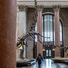 Museum of Natural History (off 1st floor)