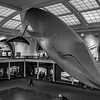 Blue Whale: 4th Floor