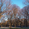 Bare Trees in Central Park