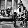 Museum of Natural History<br /> New York