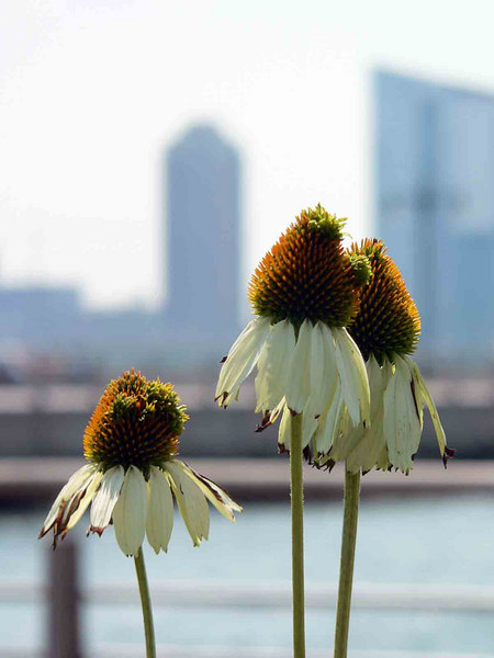 Flowers overlooking the Hudson River and New Jersey shore
