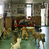 Checking out the NYC doggy care scene.
