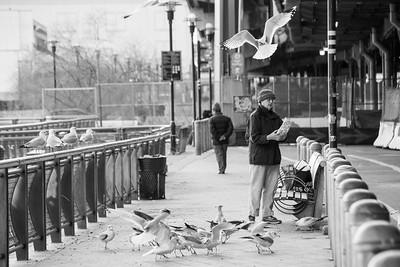 South Street Bird Feeder