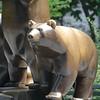 Central Park Bear Statue