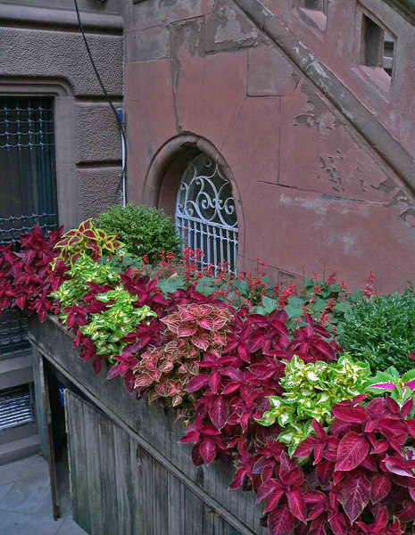 Wonderful color in a doorway entrance. This covers the trashcan area.