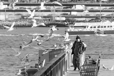 Birdman and Seagulls